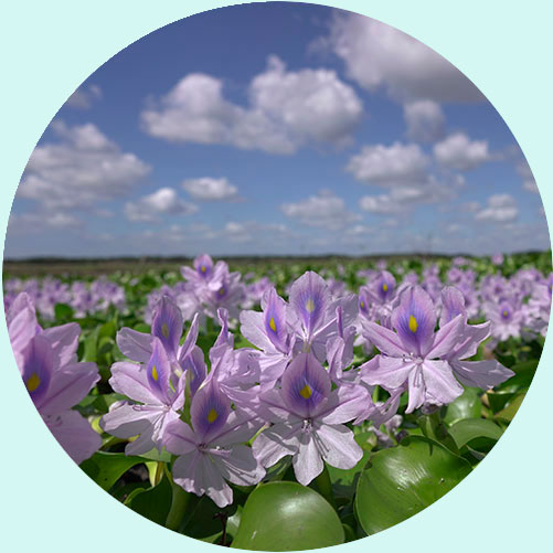 Purple Flowers against a blue sky with clouds | Environmental Education with Keep Florida Beautiful Litter Prevention, Recycling, and Education